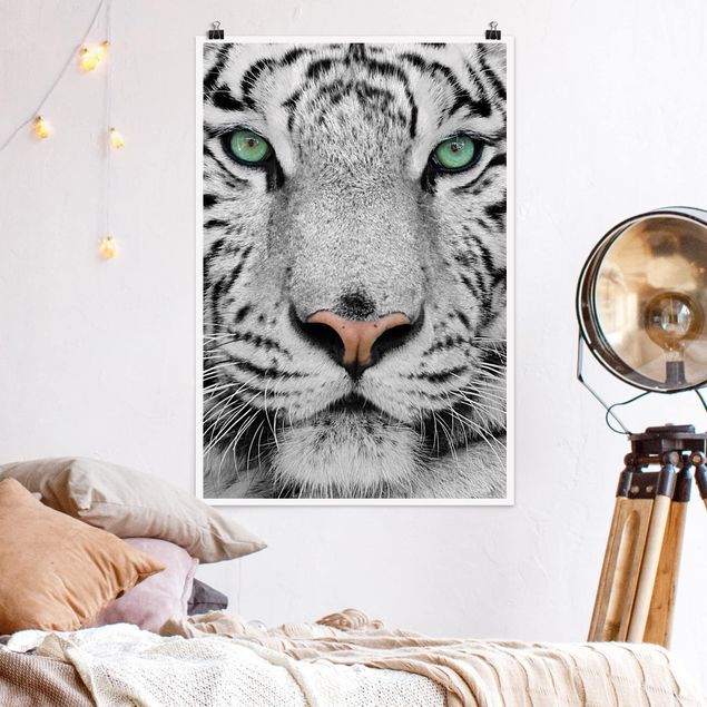 Poster - white Tiger - Verticale 3:2