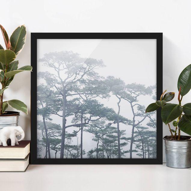 Poster con cornice - Treetops In Fog - Quadrato 1:1