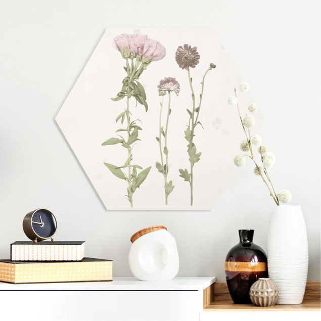 Esagono in forex - Herbarium In Pink III
