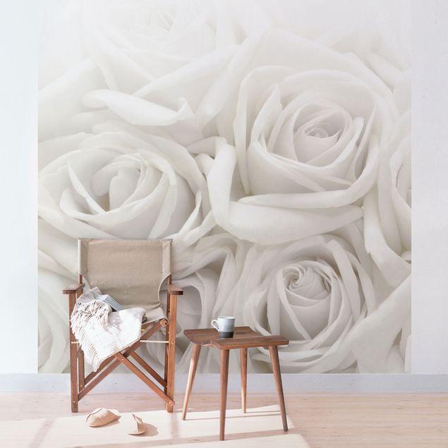 Carta da parati - Rose bianche